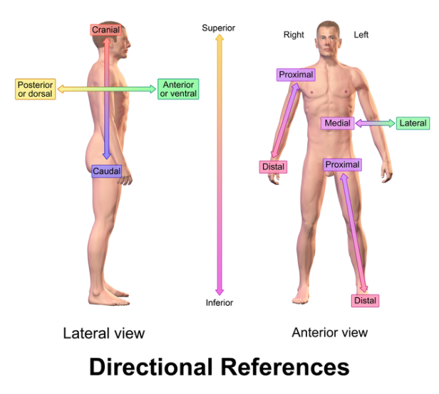 directional-references