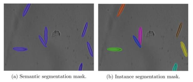 cells-semantic-vs-instance