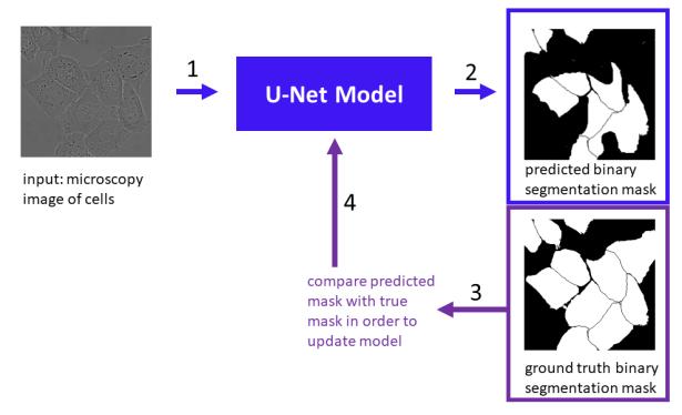 u-net-training