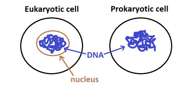 celldiagram