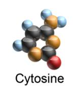 cytosine3d